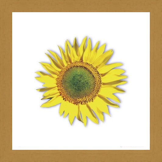 Framed Framed Sunflower - Solitary Bloom