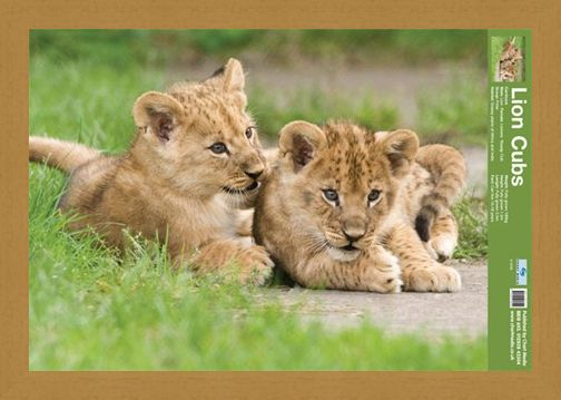Framed Framed Lion Cubs - Fun Facts