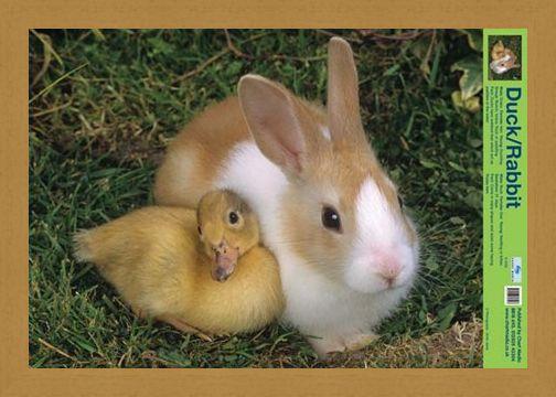 Framed Framed Best Friends - Duck And Rabbit