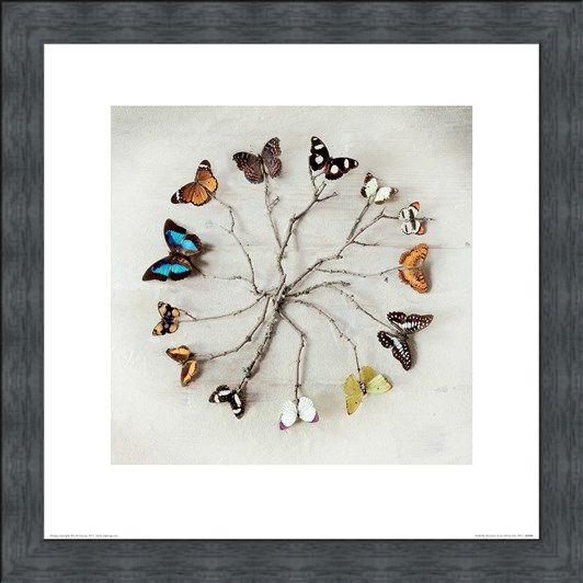 Framed Framed Butterfly Harmony - Ian Winstanley