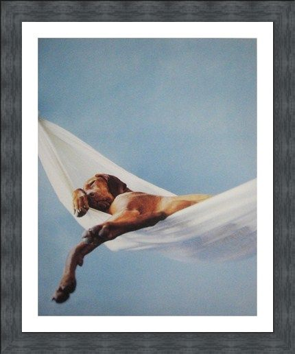 Framed Framed Lazy Afternoon - Rachael Hale