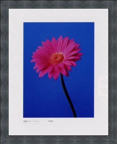 Framed Framed Gerbera Serenity - Masao Ota