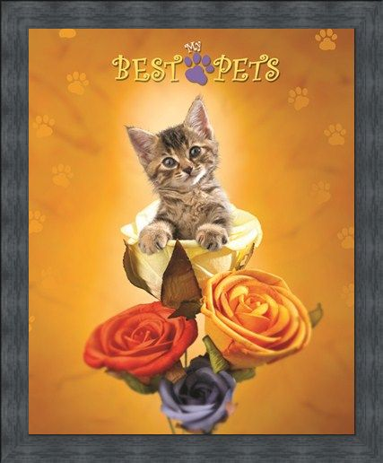Framed Framed Cat amongst the Roses - My Best Pets