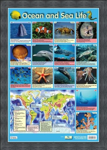 Framed Framed Ocean and Sea Life - Sea Creatures