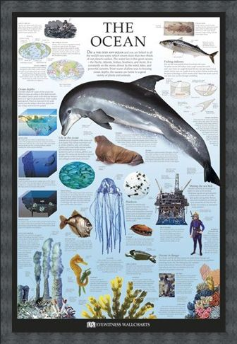 Framed Framed The Ocean - Dorling Kindersley