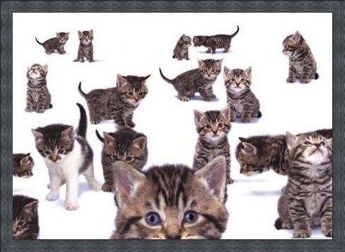 Framed Framed Curious Kittens - Kittens