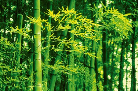 Bamboo in the Spring by Dave Brullmann - Plant life Mini Mural