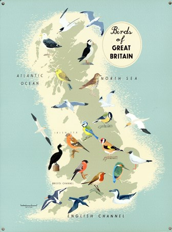 Birds Of Great Britain - Vintage Map