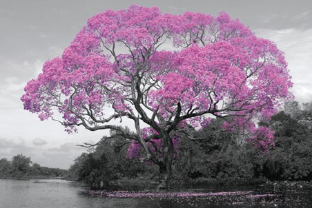 Tree In Bloom - Natural Pink
