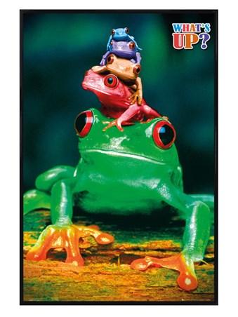 Framed Gloss Black Framed What's Up? - Five Frog Pyramid