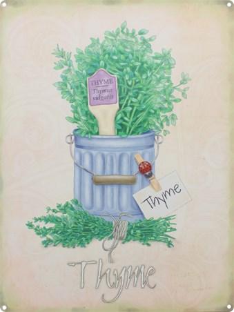 Thyme - Herb Pot
