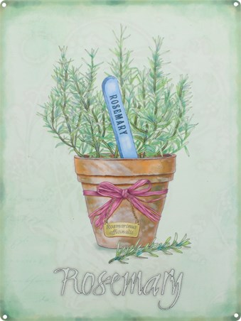 Rosemary - Herb Pot