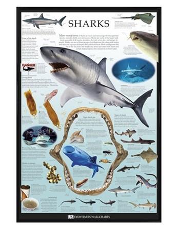 Gloss Black Framed Sharks - Dorling Kindersley