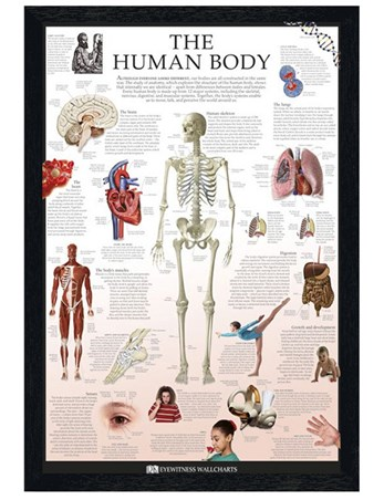Black Wooden Framed The Human Body - Dorling Kindersley