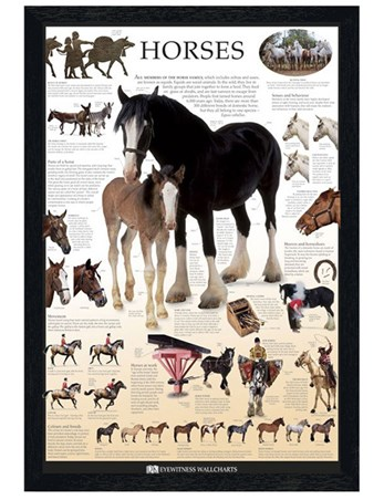 Black Wooden Framed Horses - Dorling Kindersley