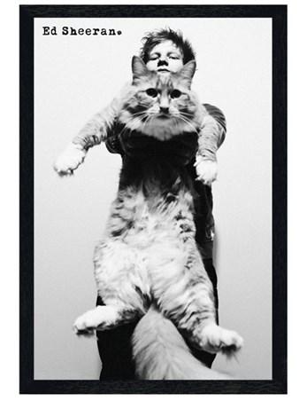 Black Wooden Framed Fat Cat - Ed Sheeran