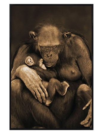 Gloss Black Framed Motherhood - Chimpanzee with Child