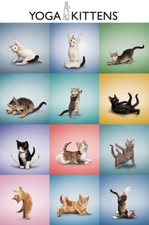 Yoga Kittens Collage - Balance and Stretch