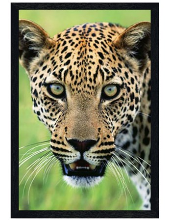 Black Wooden Framed A Jaguar's Hypnotic Stare - A Warning from Panthera Onca