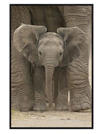 Gloss Black Framed Protected - Elephant Calf