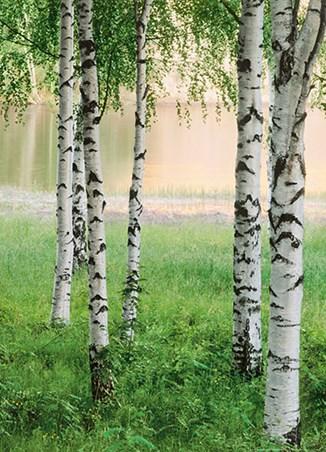Framed Nordic Forest - 4 Sheet Nature