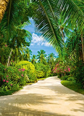 Tropical Pathway - Step Into Paradise