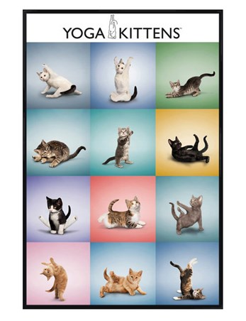 Gloss Black Framed Yoga Kittens Collage - Flexible Felines