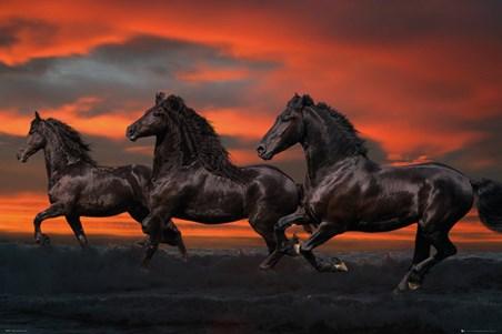 Fantasy Horses - Bob Langrish