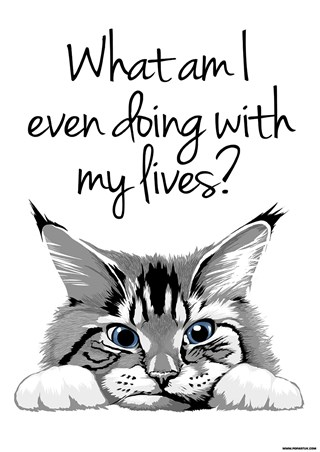 A Feline Fiasco - What Am I Even Doing With My Lives?