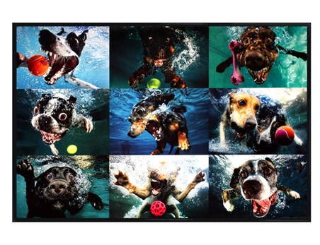 Gloss Black Framed Underwater Dogs Maxi Poster - Underwater Dogs