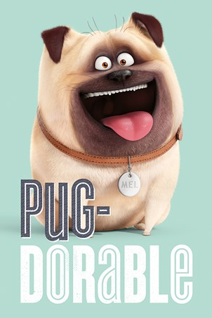 Pug-Dorable Mel - The Secret Life Of Pets