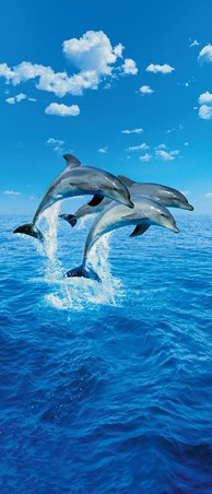 Perfect Synchronicity - Three Dolphins