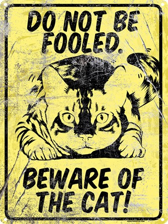 Do Not Be Fooled, Beware Of The Cat