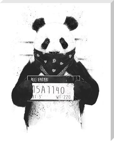 Bad Panda - Balazs Solti