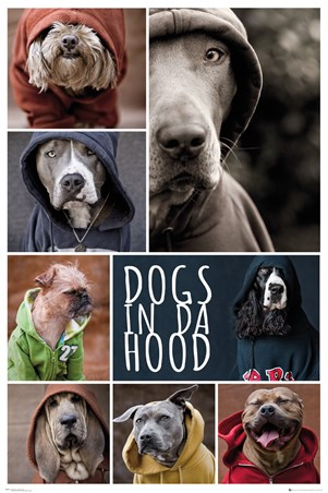 Barking Mad - Dogs In Da Hood