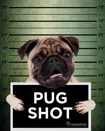 Pug Shot Banjo - Rachael Hale