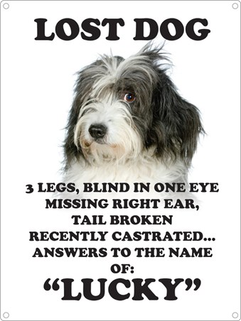 Answers To The Name Of Lucky - Lost Dog