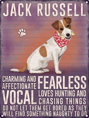 Canine Characteristics, Jack Russell