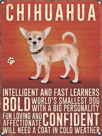 Intelligent And Bold - Chihuahua