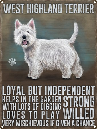 Loyal But Independant - West Highland Terrier