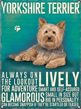 Small In Size But Big In Personality, Yorkshire Terrier