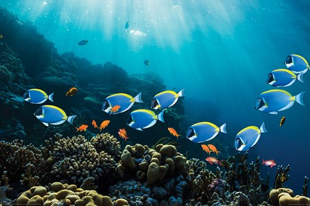 Framed Tropical Waters - Surgeonfish & Goldies