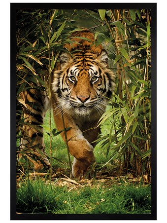 Black Wooden Framed King Of The Jungle - Bamboo Tiger