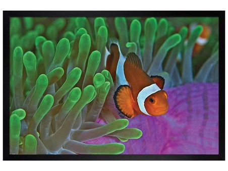 Black Wooden Framed Life In The Reef - Clownfish & Anemones