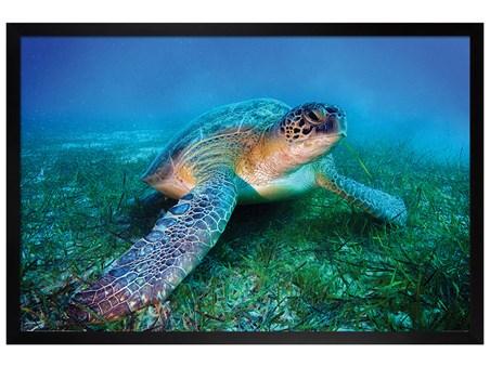Black Wooden Framed Loggerhead Sea Turtle -
