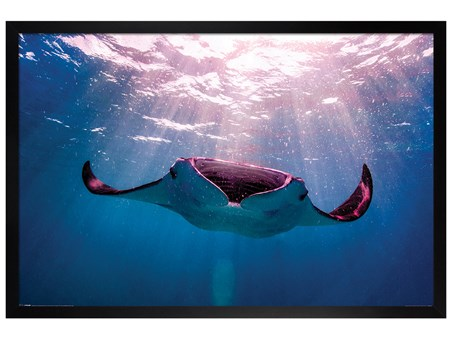 Black Wooden Framed Manta Ray - Animal Photography
