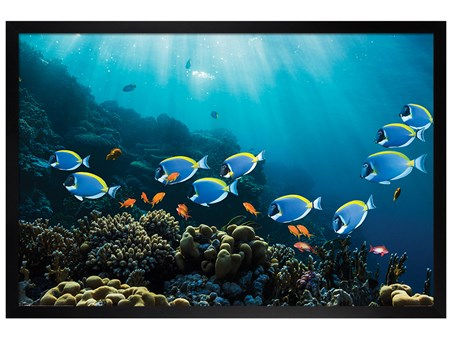 Black Wooden Framed Tropical Waters - Surgeonfish & Goldies