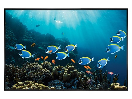 Gloss Black Framed Tropical Waters - Surgeonfish & Goldies