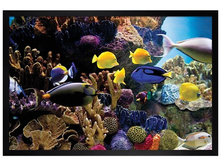 Black Wooden Framed Tropical Fish & Coral - Underwater Life