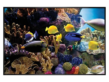 Gloss Black Framed Tropical Fish & Coral - Underwater Life